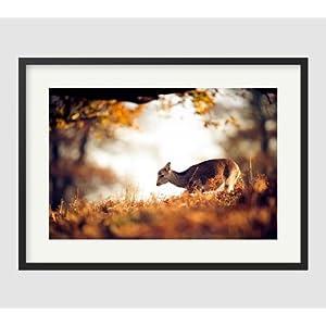 品墙画动物写实摄影作品