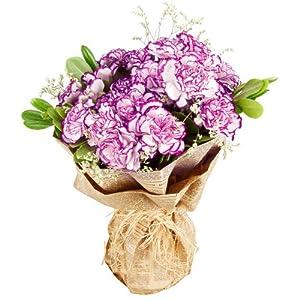 康乃馨紫边 花束(24枝)(厂商带货直送)