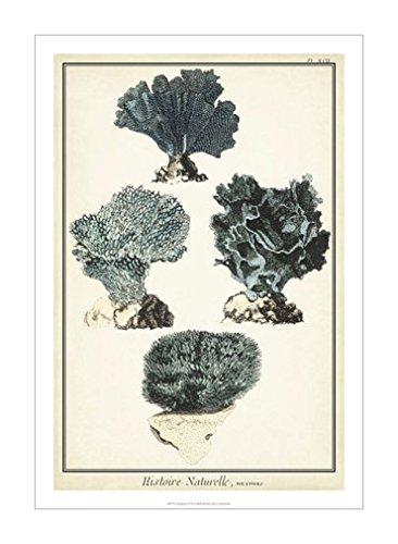 环境|海洋生物风格|海洋生物|动物装饰画分类|动物