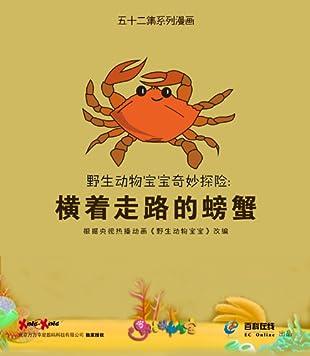野生动物宝宝奇妙探险:横着走路的螃蟹