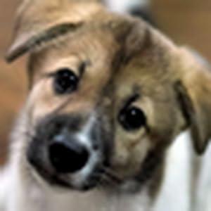 可爱狗狗的世界动态壁纸-亚马逊应用商店-亚马逊中国